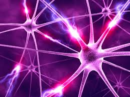 human-brain-1