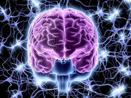 Brain-863300