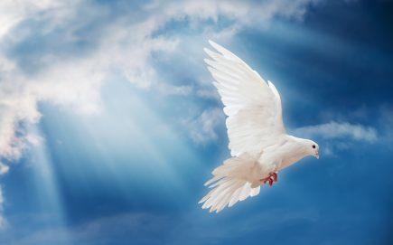 flying-dove-1